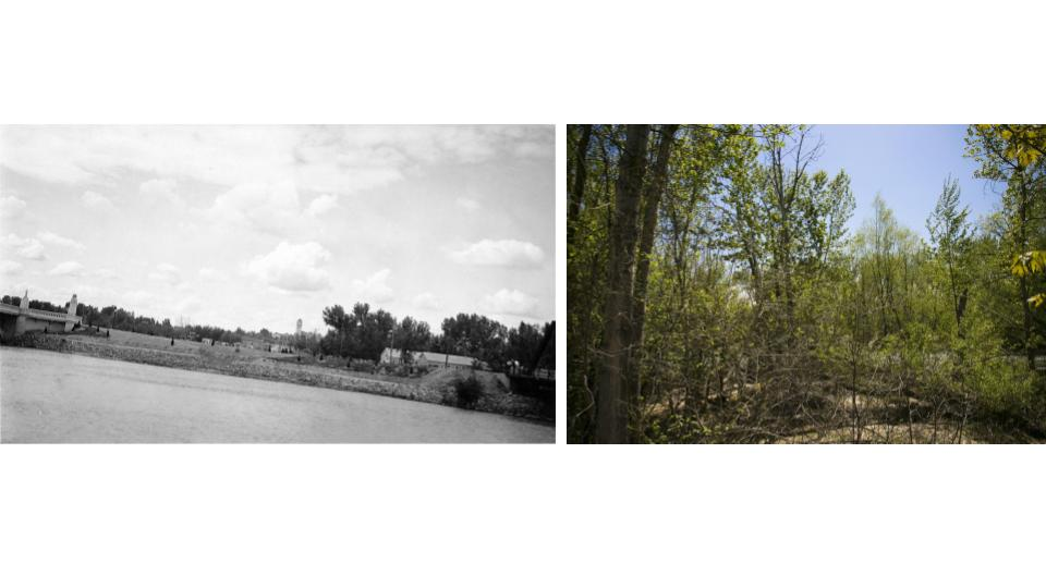 The Boise Greenbelt is now thriving with greenery. (Kristen McPeek and Idaho Historical Society)