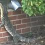 "Dispatch: ""Caller states there's a 4 ft. lizard in their yard"". Officer: Yeah, right..."