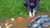As flood waters wreak havoc, charming Fredericktonians flock to save stranded fish
