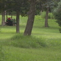 Woman airlifted to hospital after lawn mower accident in Livingston County