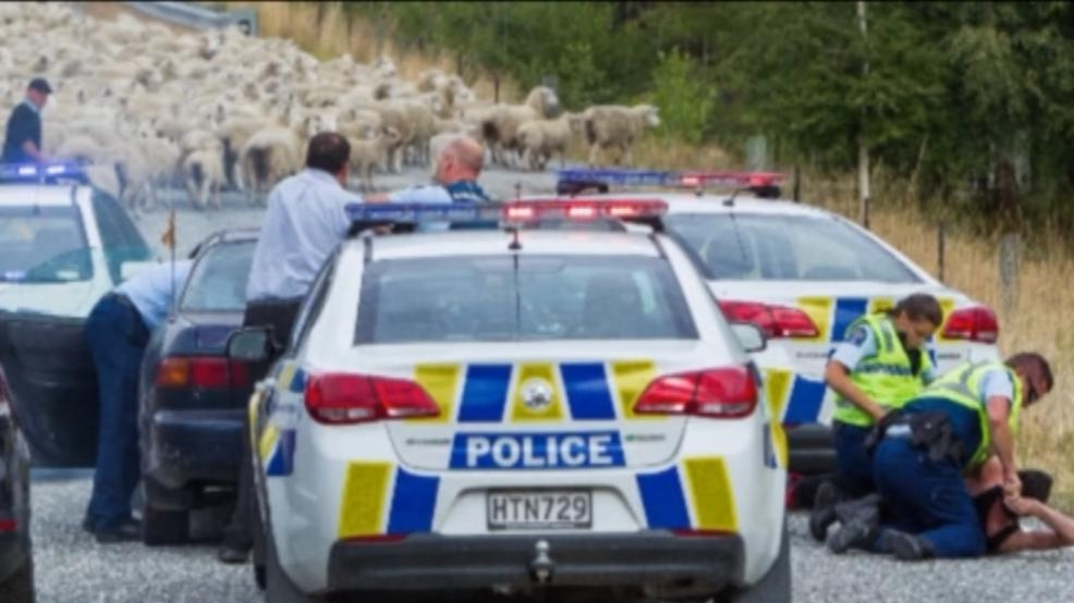 Road flock sheep help police end car chase wsyx for Abc motor credit gilchrist rd