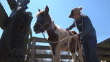 12 horses in poor condition rescued from Frederick County property