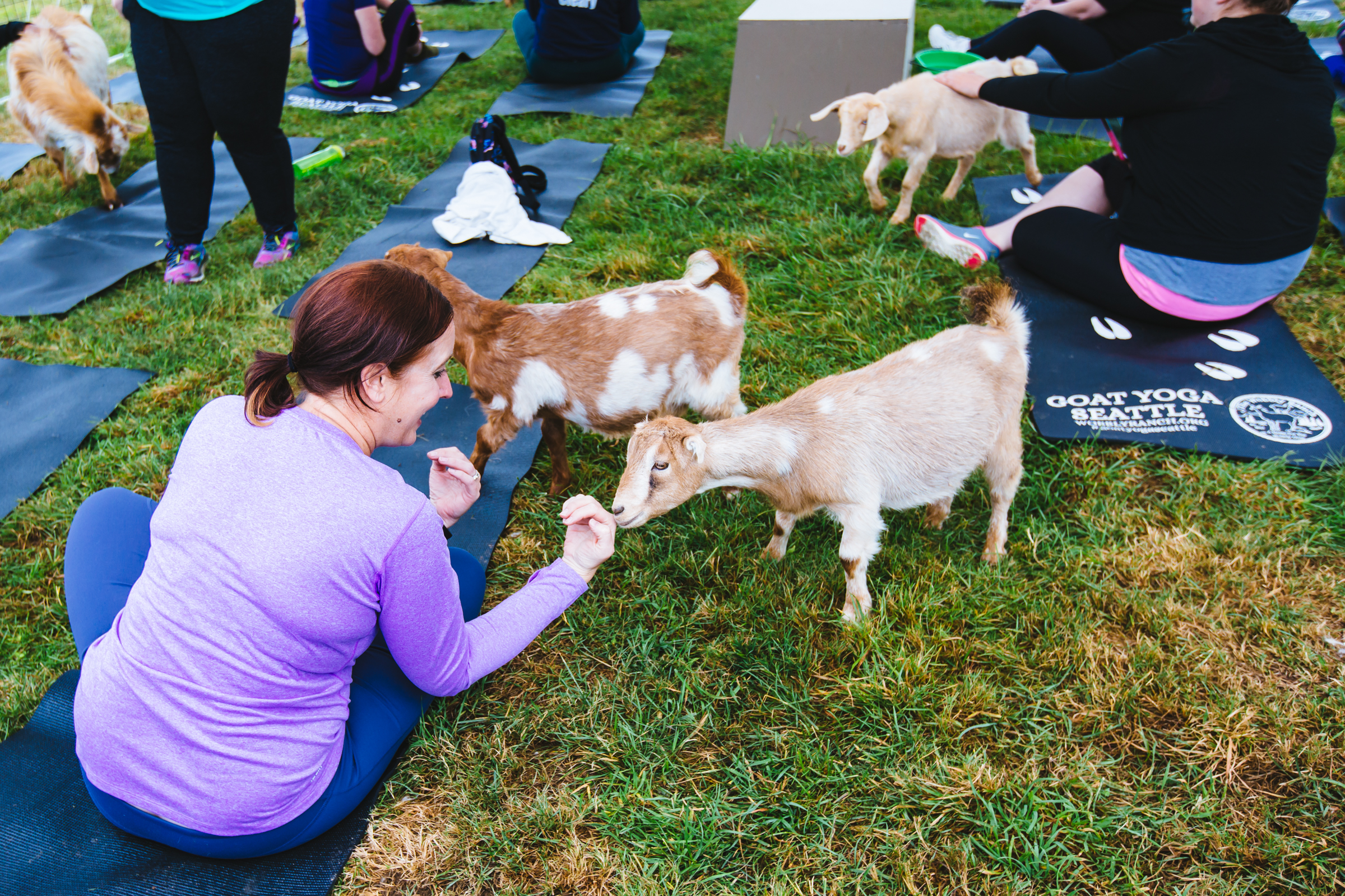 "The Wobbly Ranch in Snohomish offers weekly goat yoga classes to offset some of the costs it takes to provide and create a home for ""all of the animals that are just a little wobbly"". The experience is around two hours; the first hour of which participants are led through a yoga class by a trained instructor (while the goats wander around you), and the second you're welcome to tay and spend some time with the kiddos. For more info or to book a class, head to wobblyranch.com. (Image: Sunita Martini / Seattle Refined)"