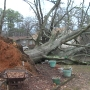 Severe weather brings down several trees, power lines in Central Alabama