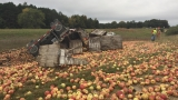 Thousands of pounds of apples up for grabs after crash