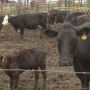 Kansas loses 800 small farms, bigger operations unchanged