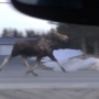 Moose caught on camera running through Fort Kent