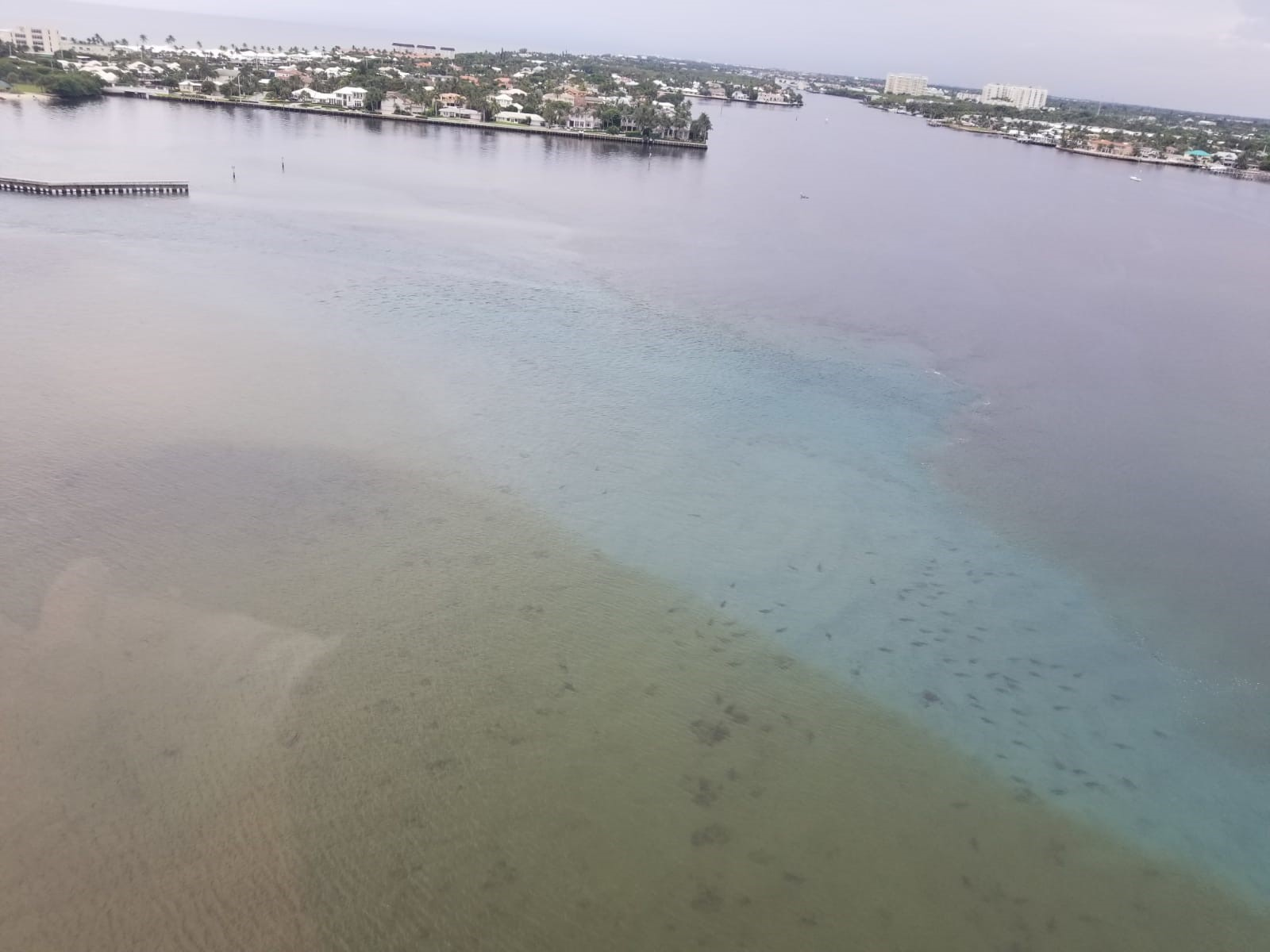 Shark Conservationist says it's very unusual to see sharks in Boynton Beach Inlet. (Southern Helicopters)<p></p>