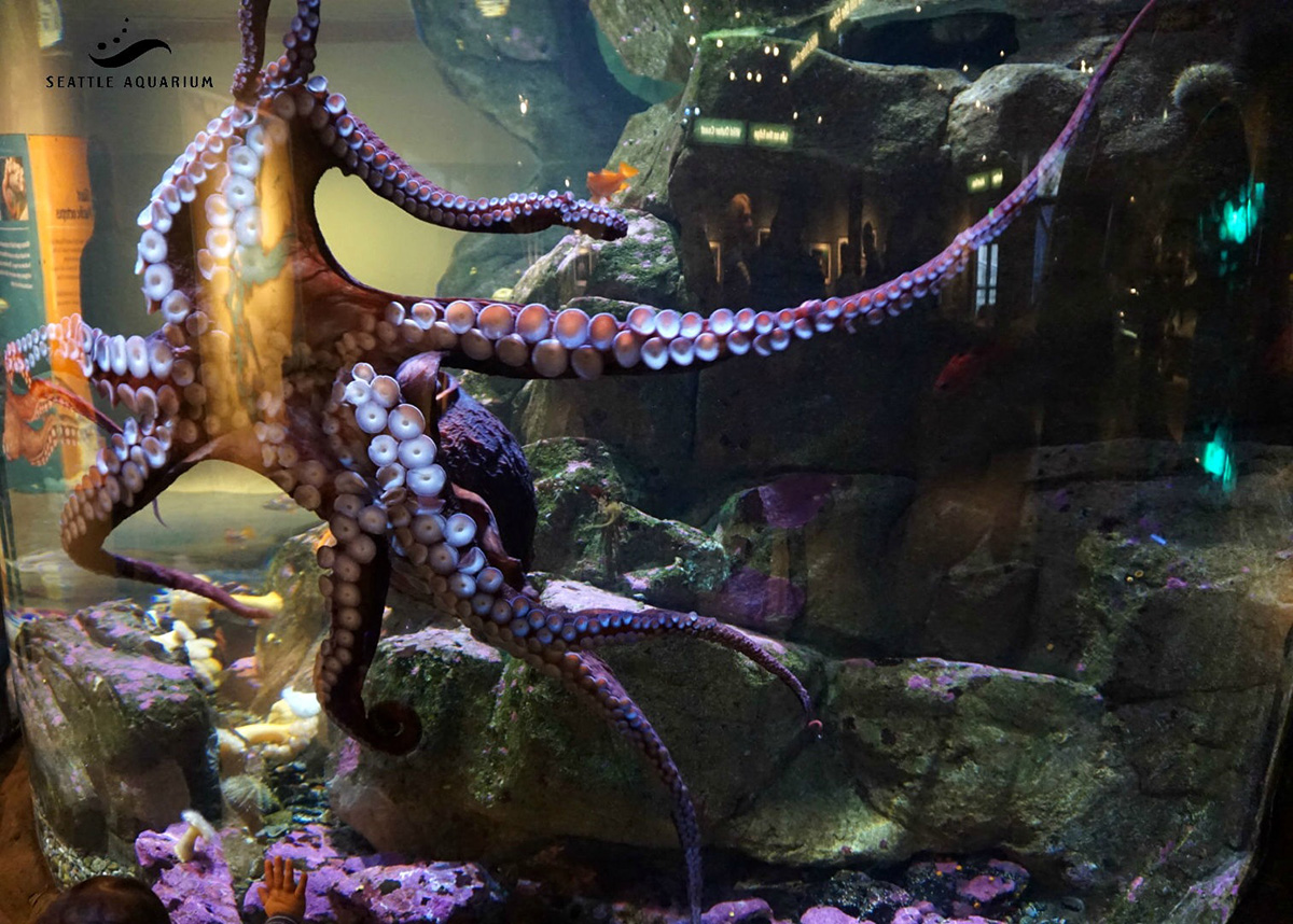 Seattle Aquarium Cancels Octopus Sex Act Due To