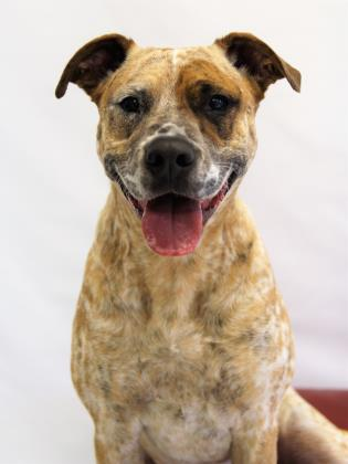 Meet Ace at Cherryland Humane Society in Traverse City.