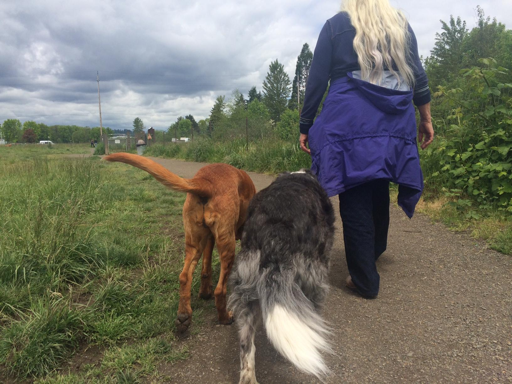 "The City of Eugene Parks and Open Space division is considering banning large dogs from a ""small dog"" park and banning alcohol from parks, among other rules. (SBG photo)"