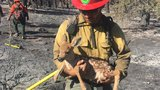 NDF firefighter saves fawn from Garson Fire