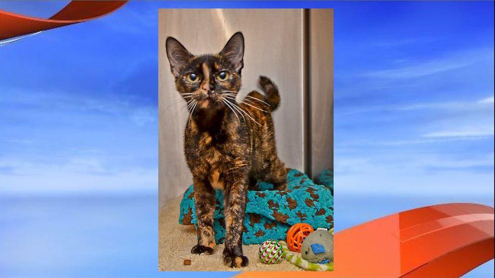 Palm City Humane Society Cats
