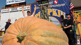 Wash. state grower sets new U.S. record with 2,363-pound pumpkin