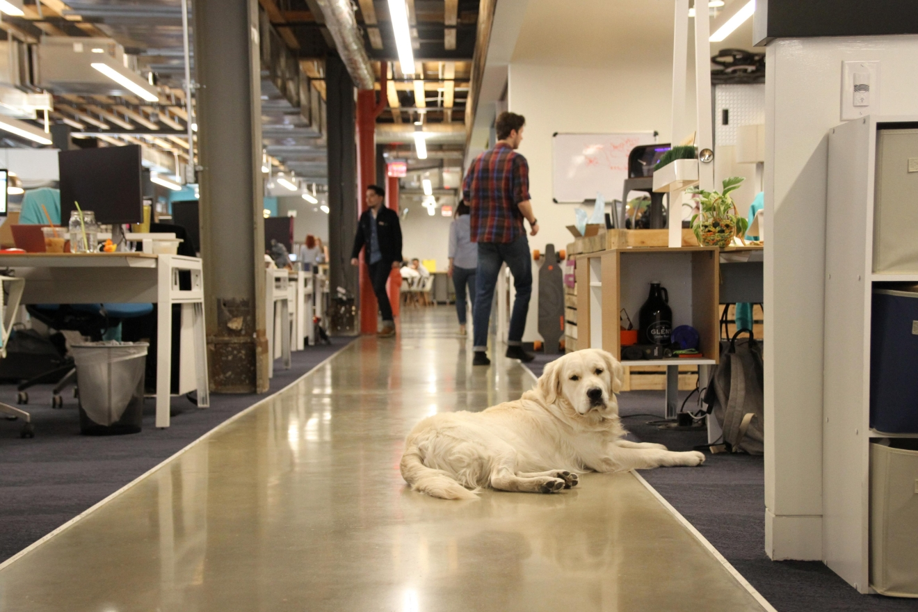 iStrategy Labs, often abbreviated to ISL, is a do-it-all kind of place. Equal parts ad agency, creative hub and digital powerhouse, ISL makes its home in the sprawling Old Wonder Bread Warehouse on the Shaw-Petworth border. (Amanda Andrade-Rhoades/DC Refined)