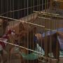 Mega Pet Adoption Event helps people find new best friends