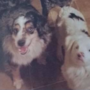 Utah dog owners seek help finding deaf, lost dogs