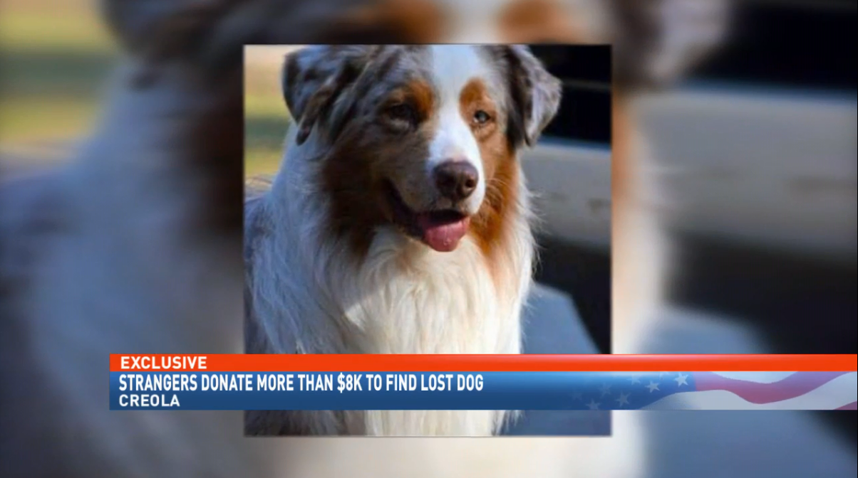 A local search for man's best friend turns global (WPMI)