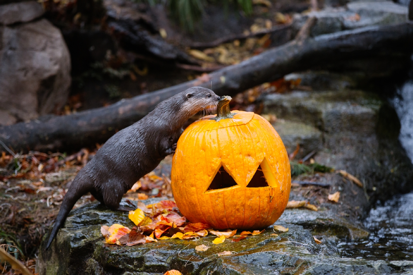 This annual event includes trick-or-treating for kids, Boomazium fun with storytelling and puppet shows and pumpkins for all the zoo animals. The fun takes place the weekend of October 28 and 29th.