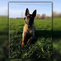 Davis County drug dog killed in line of duty