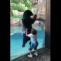 WATCH: Nashville boy jumps with bear at Nashville Zoo