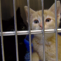 Belmont County Animal Shelter has no more room for cats