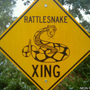 Boy, 12, bitten by rattlesnake after crashing four-wheeler