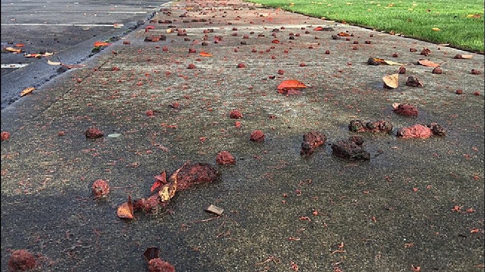 Slimy mystery: Thousands of worms cover Auburn sidewalk after rainstorm