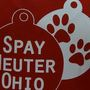 City addressing feral cat problem