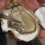 Health warning about raw oysters after 39 people become sick