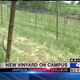 Charlie's Place: UCC breaks ground on new campus vineyard