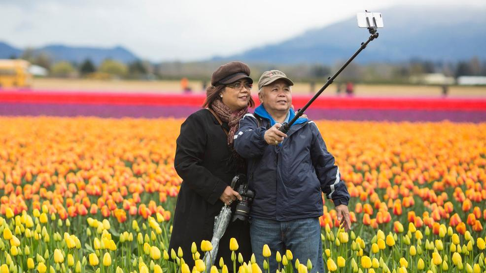 PHOTOS | Skagit Valley tulips are in full bloom
