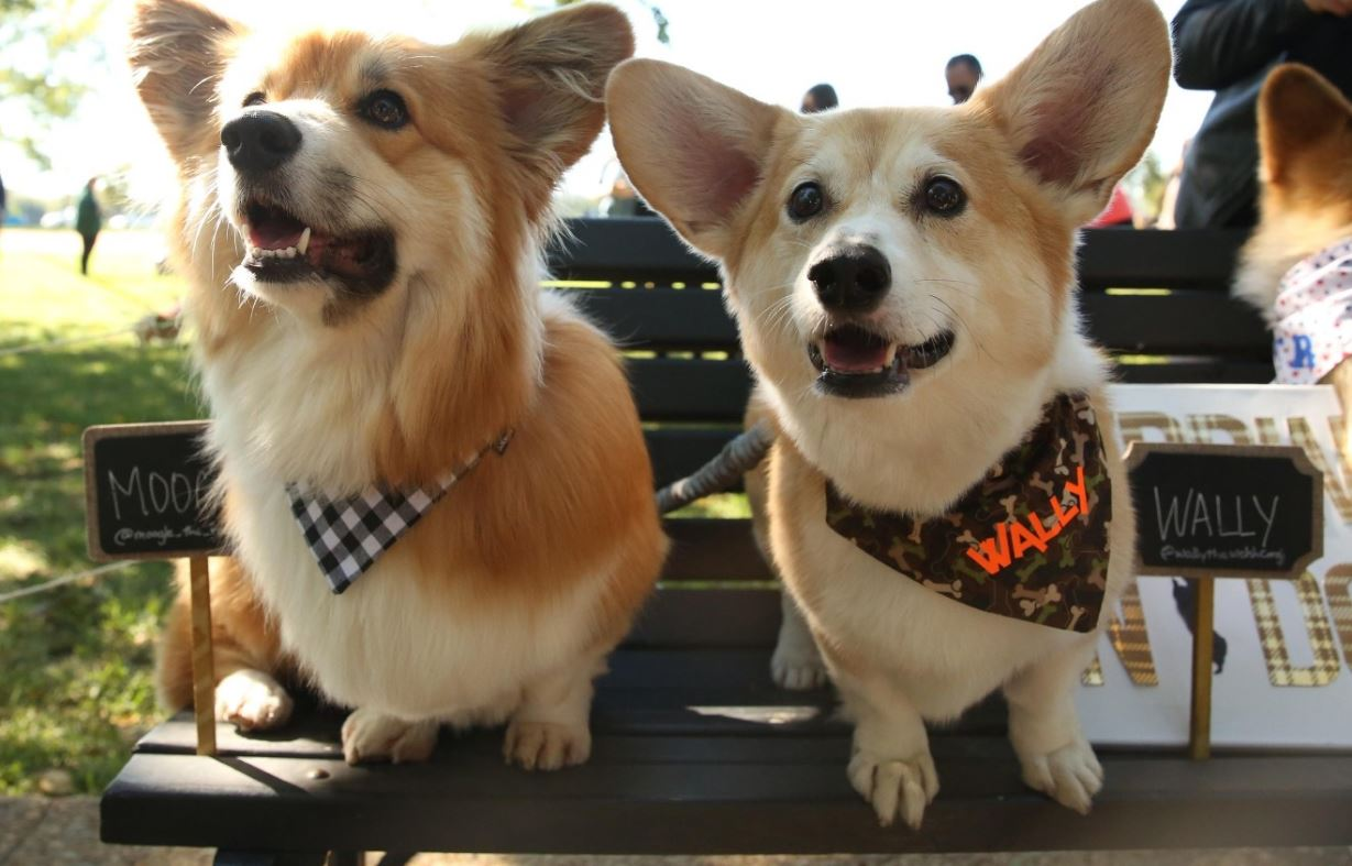 Since we launched on April 14, 2016, we have had the pleasure of meeting some of the cutest, fluffiest, lovingest pets of the DMV. From corgi pool parties to dogs and birds who feed each other Doritos, we feel like we've seen it all-- but we're sure 2017 will bring new surprises. Before we ring in the new year, we wanted to take a look back at our favorite pet photos of 2016! (Image: Amanda Andrade-Rhoades)