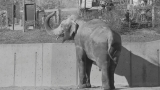 'There will never be another like him': Packy, Oregon's elephant (1962 to 2017)