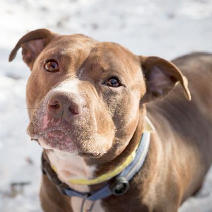 Mac is very sweet and loves to be around people (Humane Rescue Alliance)