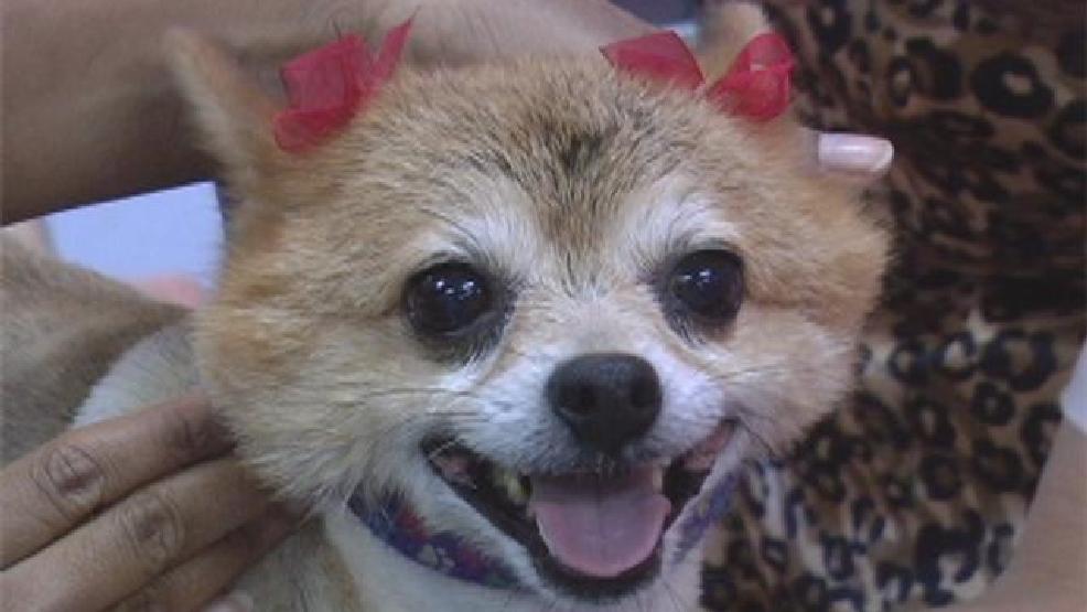 Nevada Humane Society Hosts Free Pet Adoptions Krnv