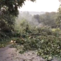 Toppled trees, downed power lines after microburst in Rye Township
