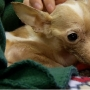 Lewiston dog recovering after being found in trash