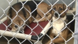 Dogs Removed From Condemned House Expected To Survive
