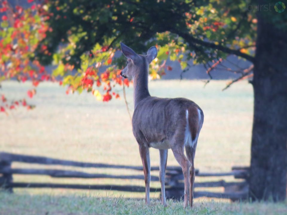 Deer surveys the changing season in Robbinsville. Photo: Anonymous<p></p>