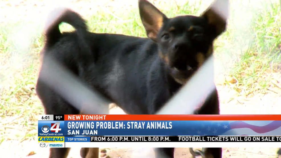 More than 1,500 stray dogs found in San Juan in 2018 | KGBT