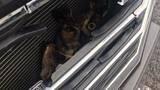 Owl hitches 166-mile ride from Roanoke to Petersburg in SUV's grill
