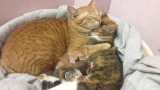 Father cat supports mom after labor with snuggles
