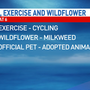 Governor OKs Illinois' official pet, exercise and wildflower
