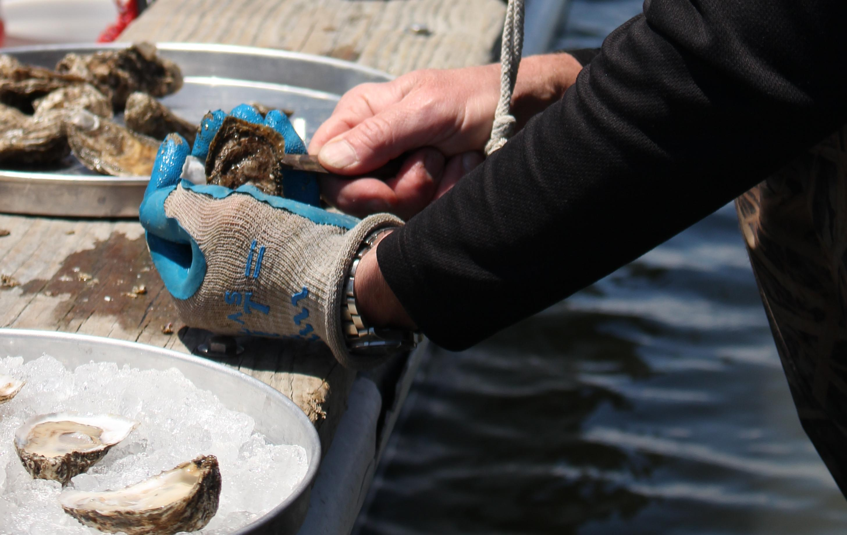 If you want to slurp down some of the freshest oysters from the Chesapeake region, look no further than Virginia's oyster trail, located mostly on the Northern Neck and Middle Peninsula regions of the Chesapeake Bay. (Image: Courtesy Virginia Oyster Trail)