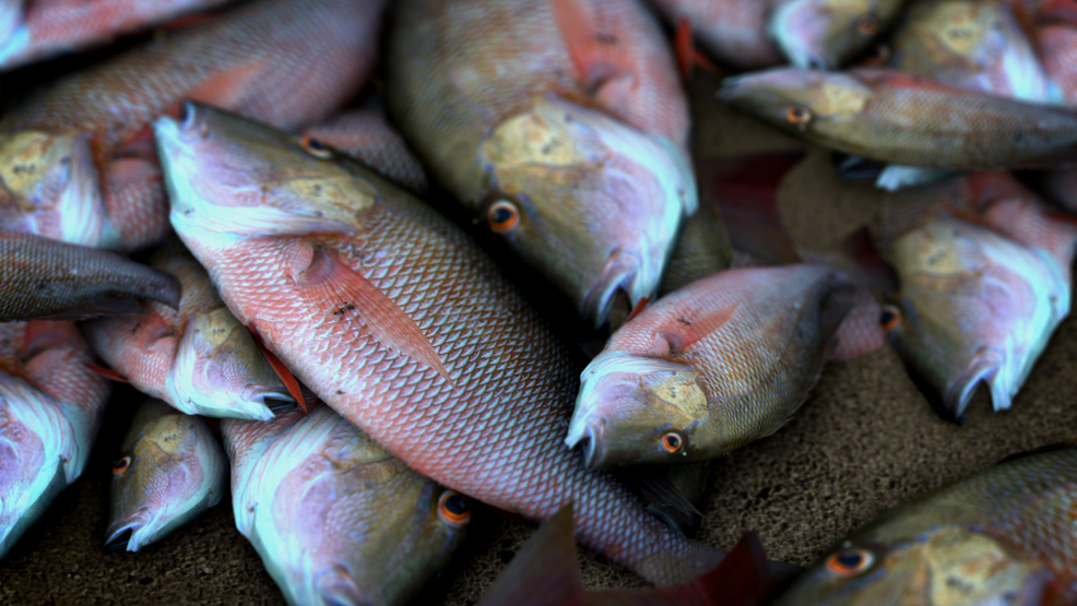 Alabama health dept issues 2017 fish consumption for Alabama game and fish regulations